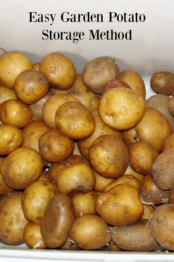 Easy garden potato storage method- eat potatoes through February