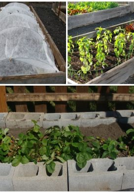 Easy Care Vegetable Garden Raised Beds Examples