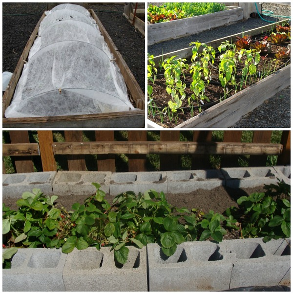 Vegetable garden design for easy care or the lazy for Easy care garden designs
