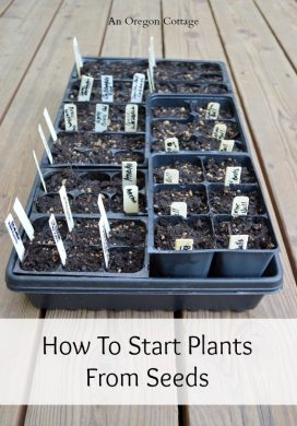 How to Start Plants From Seeds - An Oregon Cottage