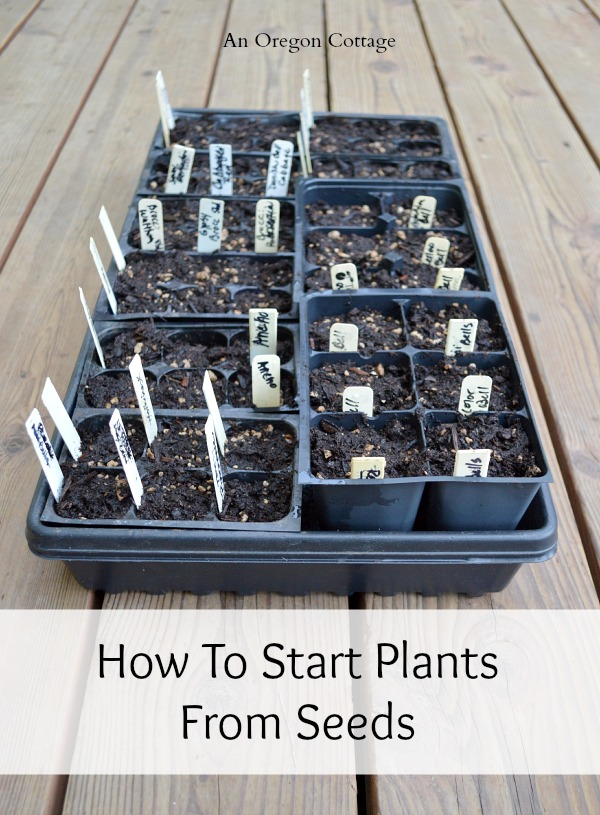How to Start Plants From Seeds-seedling tray