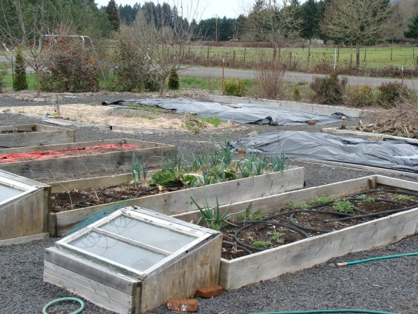 Weed killing with plastic in an easy care raised bed garden.