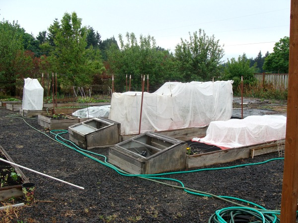 Easy care vegetable garden in spring - using raised beds makes it easy to cover early crops.
