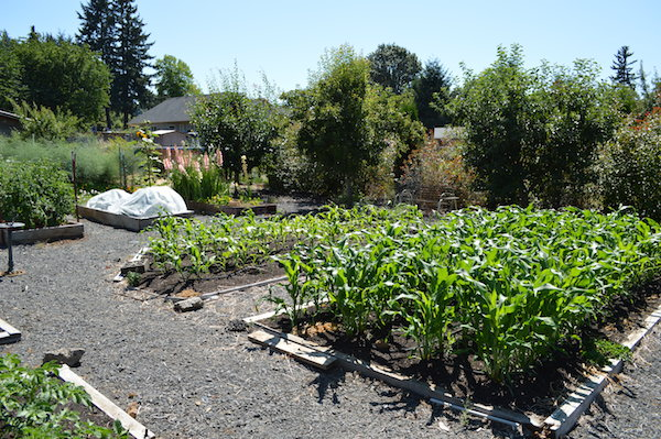 Mid summer easy care vegetable garden
