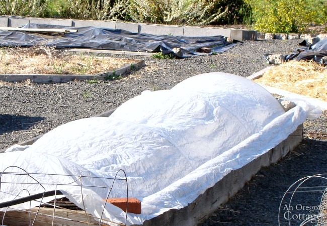 Covered raised brassica bed
