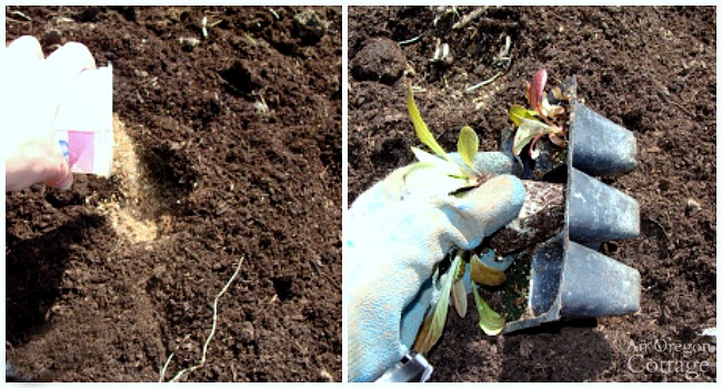 First steps for planting seedlings-prepping holes and removing transplants