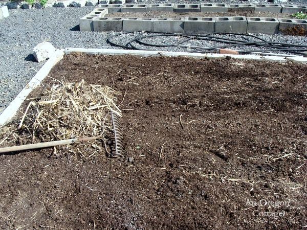 No-Till Vegetable Bed- cleaning up weed-free bed