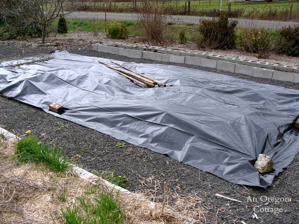 No-Till Vegetable Bed covered in plastic