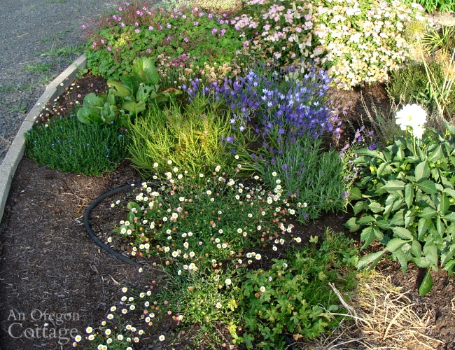 weed-free flower bed-circular front