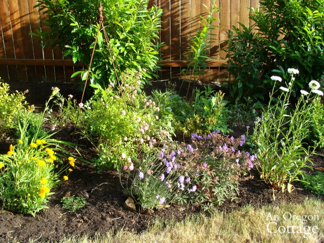 weed-free flower bed-far back border with mulch