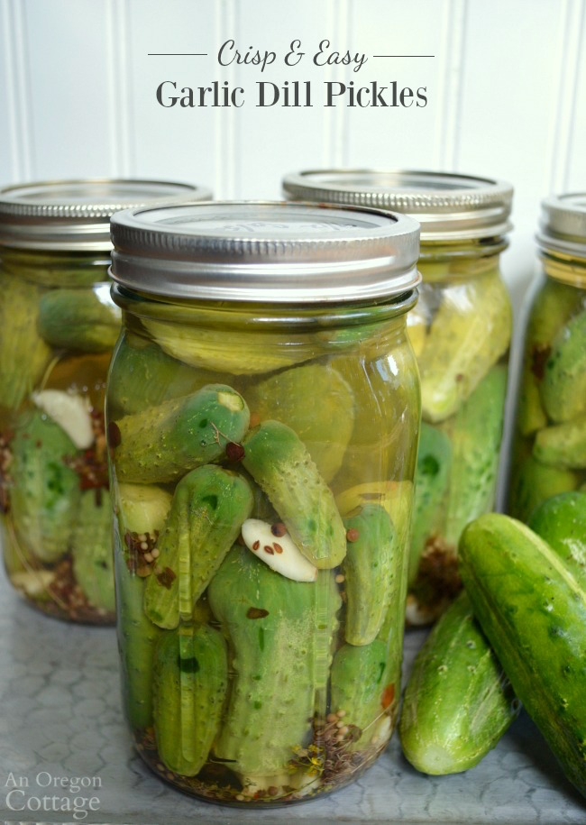 No canning needed quick refrigerator dill pickles flavored with lots of garlic and spices. If you like your pickles CRISP, this is the recipe for you!