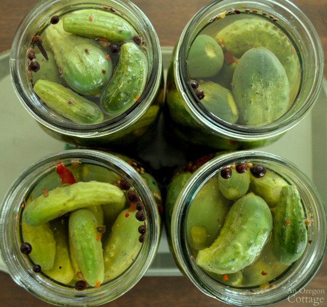 Quick Refrigerator Garlic Dill Pickles-packed with brine