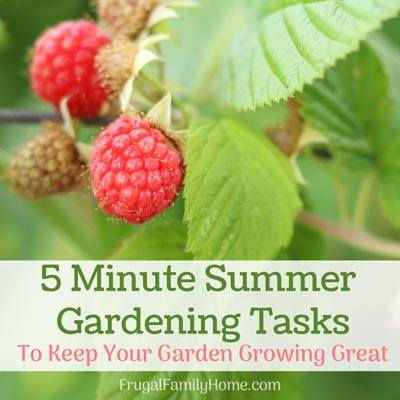 Frugal Family Home's Garden tasks