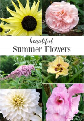 Beautiful Summer Flowers to Grow