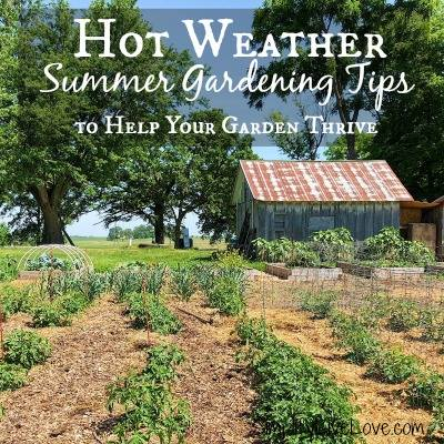 Summer Tips to Help Your Garden Thrive_Simplify Live Love