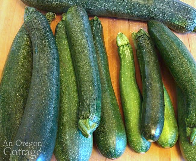 zucchini harvest on cutting board