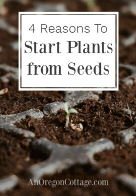 reasons to start plants from seeds image