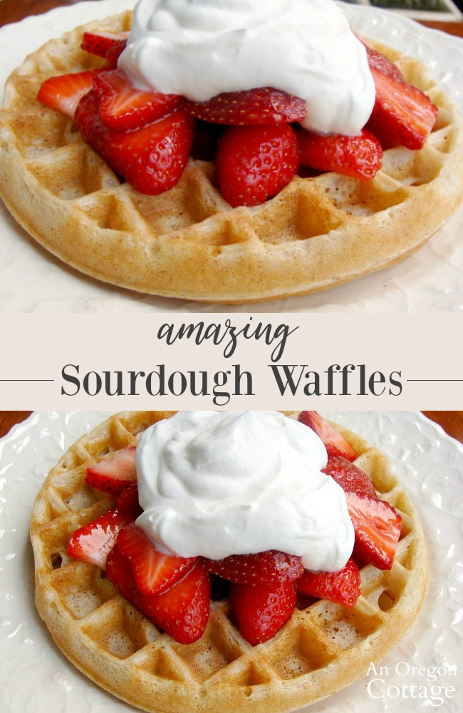 Belgian Style Sourdough Waffles with strawberries and whipped cream