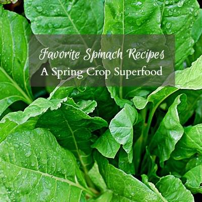 Favorite spinach recipes via Hearth and Vine