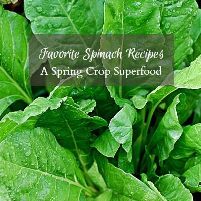 Favorite spinach recipes via Hearth and Vine