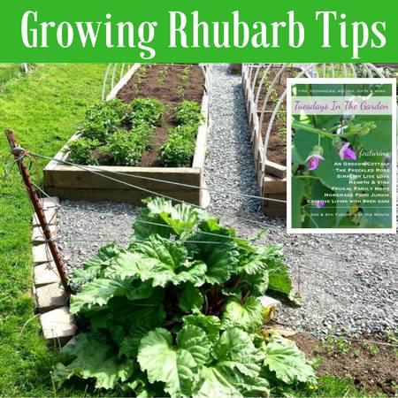 Tips for growing rhubarb via Homemade Food Junkie