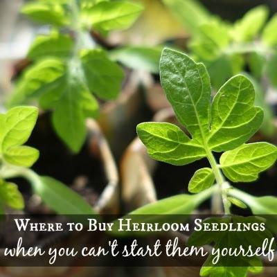 Where to buy heirloom seedlings via SimplifyLiveLove