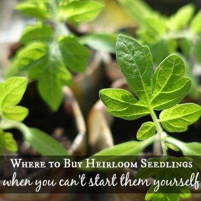 Where to buy heirloom seedlings via SimplifyLiveLove