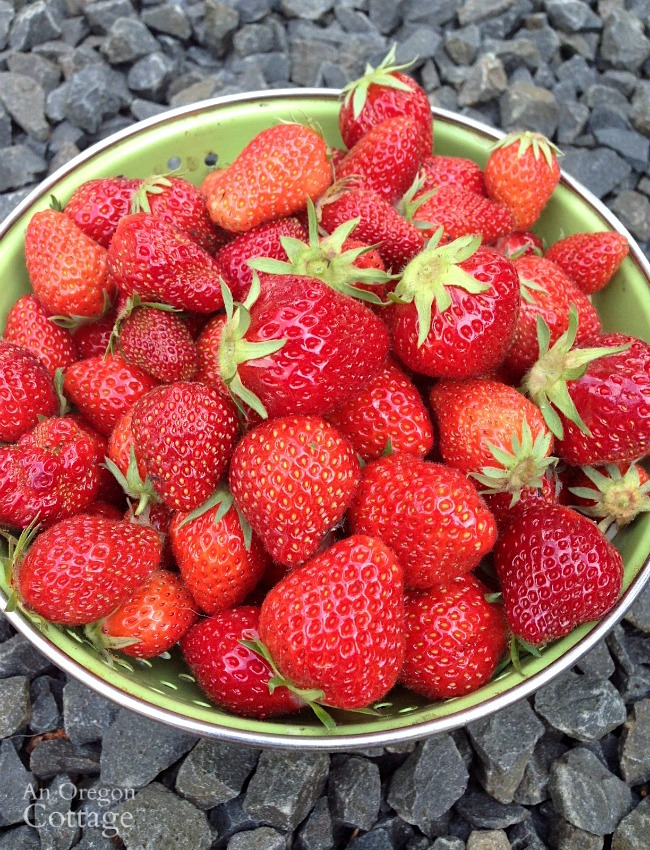 How to freeze strawberries-berries in colander