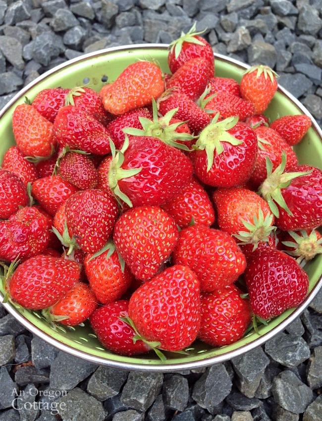 How to freeze strawberries-berries in colander