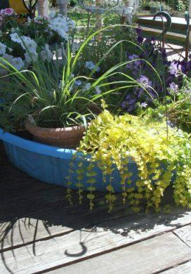 Vacation watering tip-plants in kiddie pool