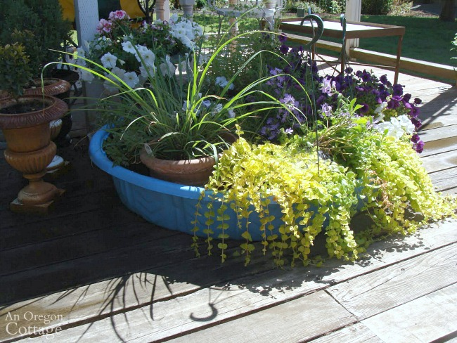 Vacation watering tip-plants in kiddie pool