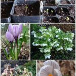 Garden Chores by Month February