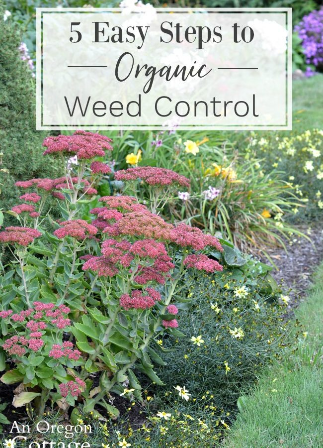 5 easy steps-organic weed control
