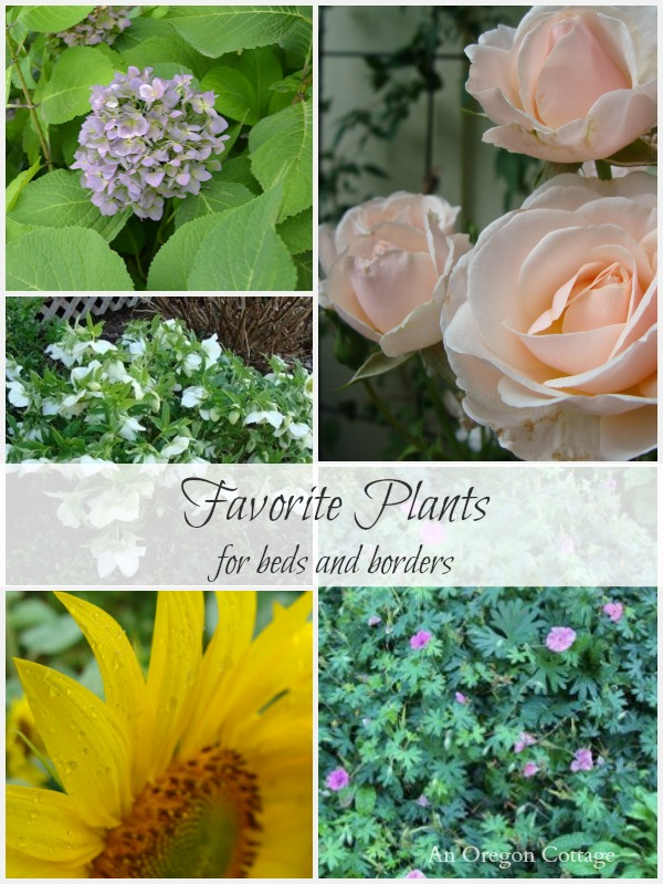 Favorite Plants for Beds and Borders