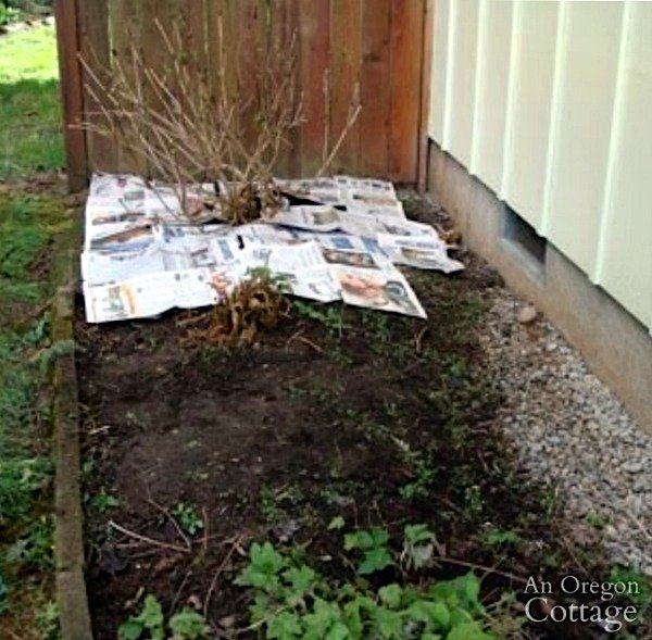 Laying Newspaper Layer in Flower Bed