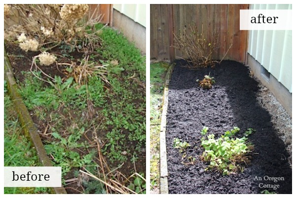 Organic Weed Control Border Before And After An Oregon Cottage