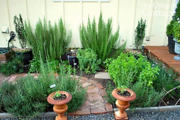 herb garden summer2013
