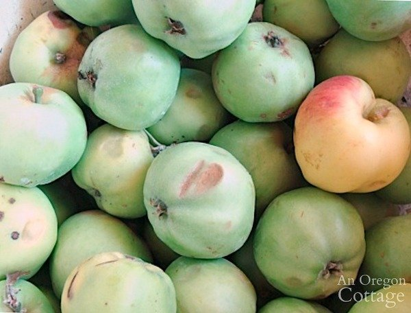 bucket of green sour apples