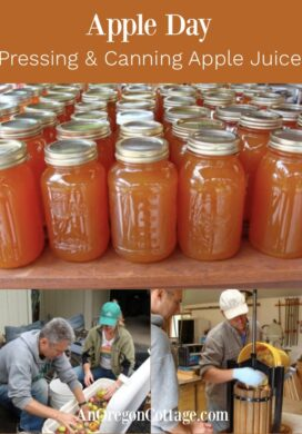 Apple Day-Pressing and Canning