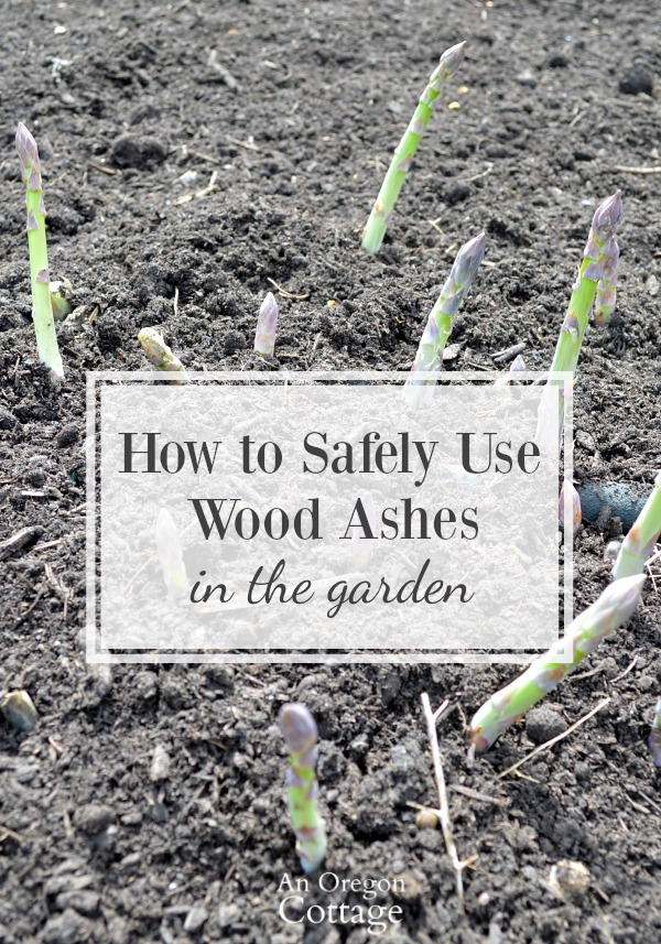 How to Safely Use Wood Ashes in the Garden-tips and precautions