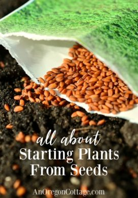 seed starting-garden seeds on soil