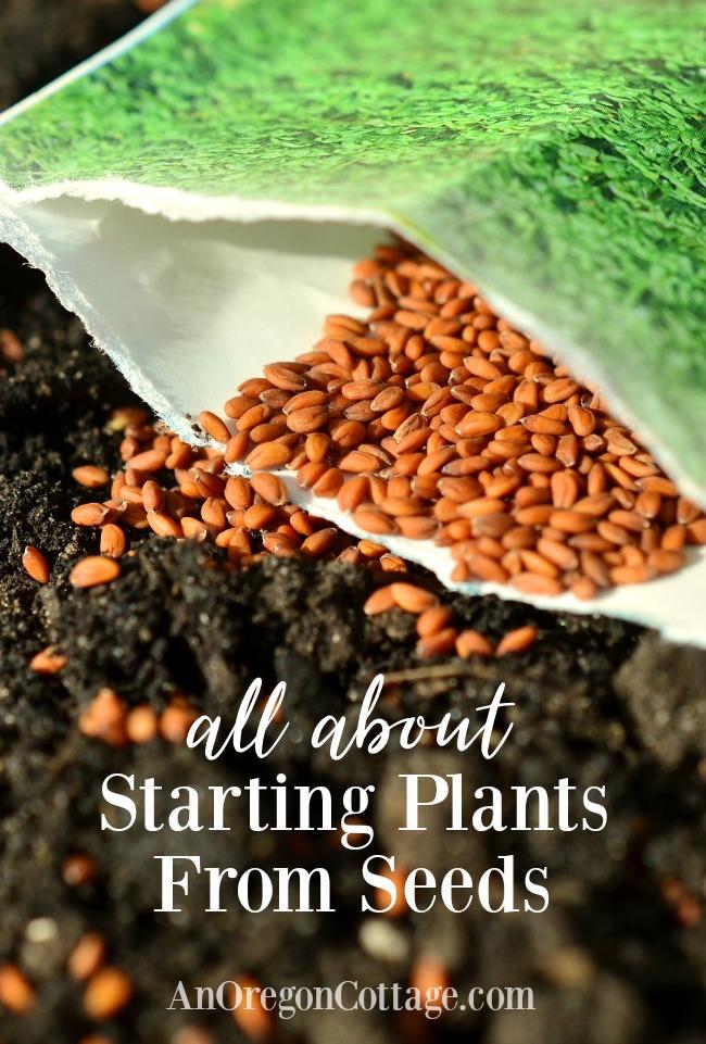 seed starting guide -garden seeds on soil