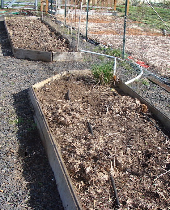 Asparagus beds March 2012