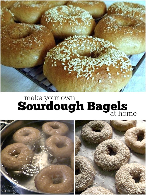 Picture tutorial and recipe to make sourdough bagels at home
