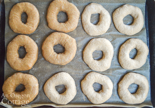 half boiled sourdough bagels on pan