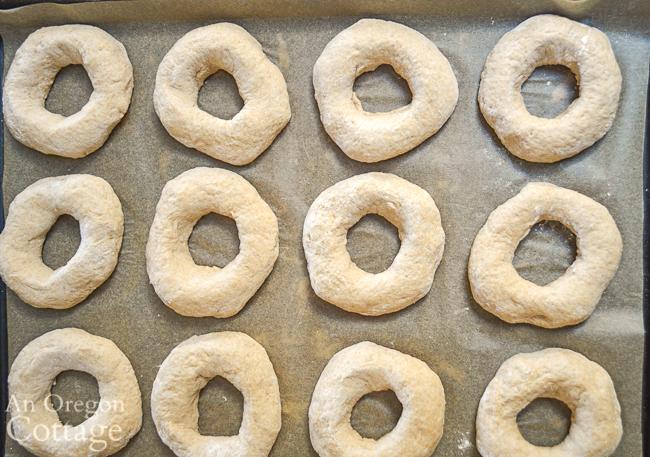 sourdough bagels rising on pan