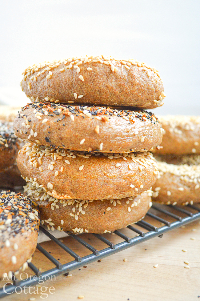 sourdough bagels stacked