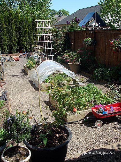 Shannan's garden_blog