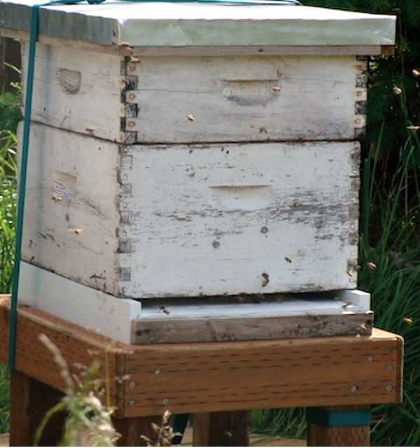 Active beehive