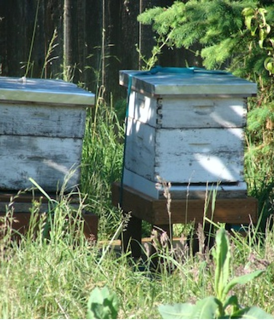 two new behives